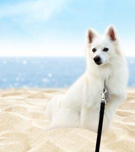 Echo Dog at the beach