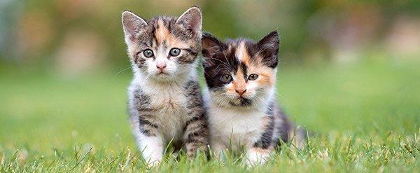 Cat Pet Evac Pak Emergency Survival Kit