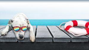 Marshall Dog sitting on the dock