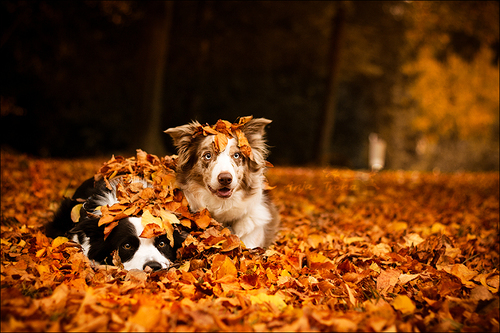 pet evacuation kits for fall