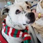 Therapy Dog Marshall at Hospital