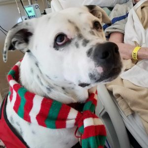 Therapy Dog Marshall at Hospital